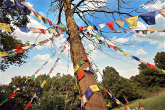 Flag-Tree-1