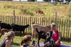 A goat yoga session held in the paddock of a farm on a warm and sunny summers morning