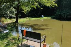 Frog-Pond-1