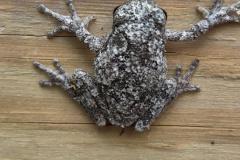 Farm-Frog